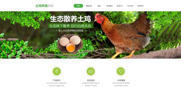 陇网天下-陇南网站建设公司